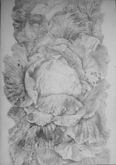 Nature Drawing, pencil, figurative, artwork by Oksana Prudnikova