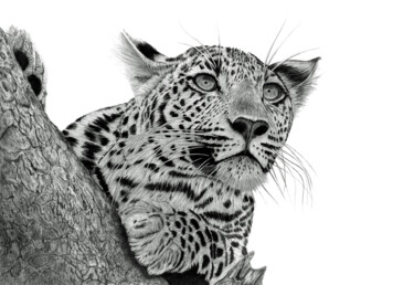 """Drawing titled """"Pensive Leopard"""" by Paul Stowe, Original Art, Graphite"""