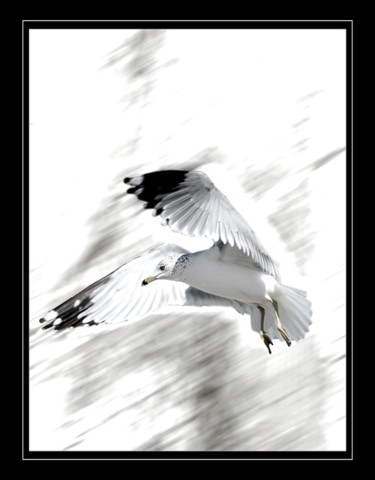 """Photography titled """"Gull"""" by Pfister, Original Art, Other"""