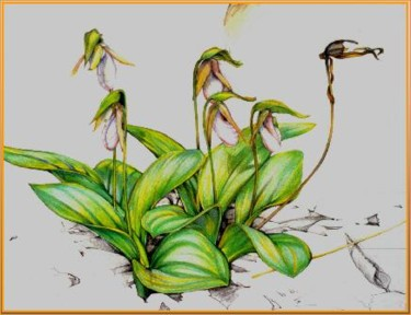 """Drawing titled """"Lady Slippers Full…"""" by Robin Mols, Original Art,"""
