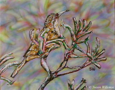 """Painting titled """"Spinebill on Kangar…"""" by Susan Willemse, Original Art, Acrylic Mounted on Stretcher frame"""