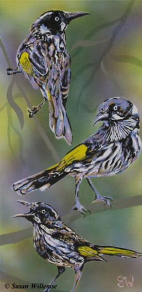 """Painting titled """"New Holland honeyea…"""" by Susan Willemse, Original Art, Acrylic Mounted on Stretcher frame"""