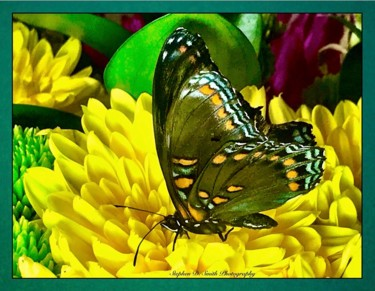 """Photography titled """"Yellow and Green Bu…"""" by Stephen D. Smith, Original Art, Digital Photography"""