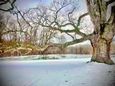 """Photography titled """"Old Sycamore Tree w…"""" by Stephen D. Smith, Original Art, Digital Photography"""