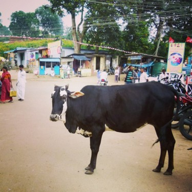 """Photography titled """"Sacred cow"""" by Simdel Pictures, Original Art,"""