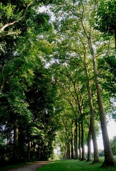 """Photography titled """"dialogues with trees"""" by Pascal Senequier Buquen, Original Art,"""