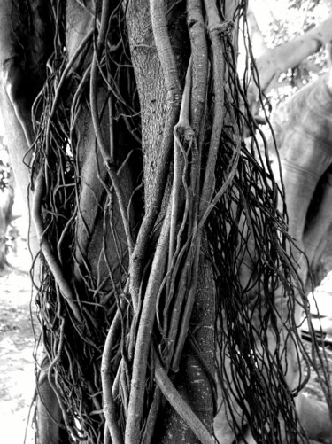 """Photography titled """"Unraveling"""" by Stacey Harris, Original Art, Digital Photography"""