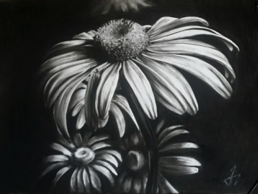 """Drawing titled """"Chamomile"""" by Tamar Mikaberidze, Original Art, Charcoal Mounted on Glass"""