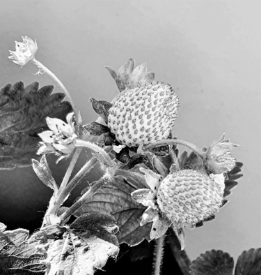 """Photography titled """"strawberry"""" by Tanja Niegsch, Original Art, Digital Photography"""