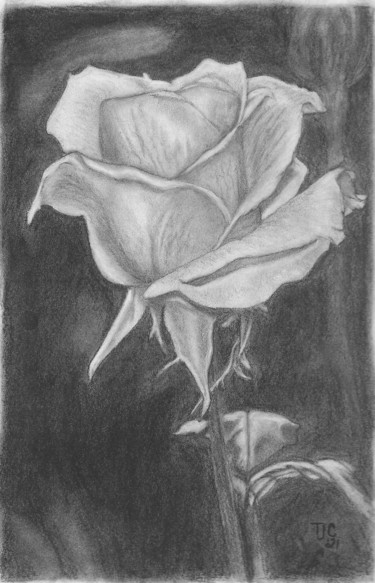 Flower Drawing, charcoal, hyperrealism, artwork by Tammy Carrick