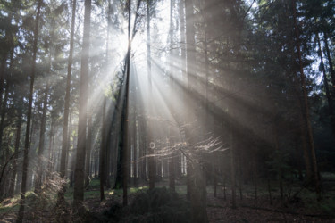 """Photography titled """"Rays of light in th…"""" by Adriana Mueller, Original Art, Digital Photography"""