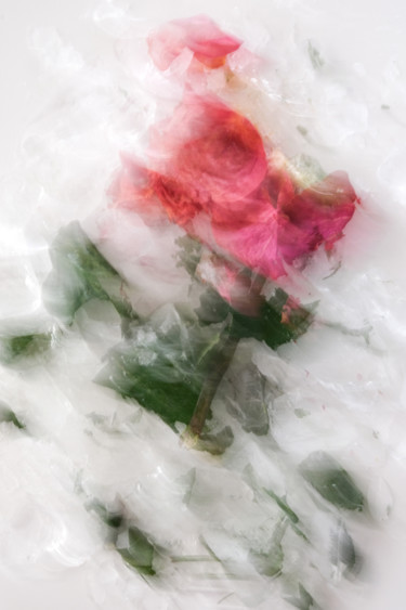"""Photography titled """"Rose Floral"""" by Yana Yushkevich, Original Art, Digital Photography"""