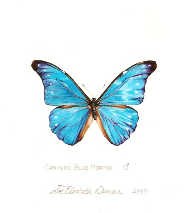 """Painting titled """"cramers-blue-morpho"""" by Zoe Norman, Original Art, Watercolor"""