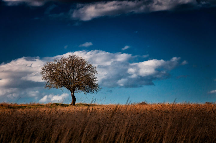 """Photography titled """"Lonely tree in spri…"""" by Absenth Photography, Original Art,"""