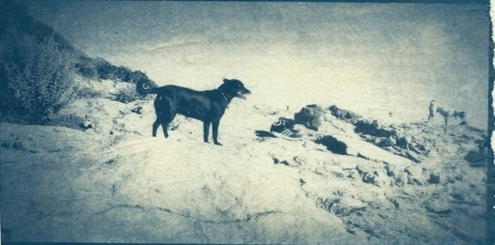 Les chiens des Rochers - Photography,  3.9x6.9 in, ©2017 by Ariane Canta-Brejnik -                                                                                                                                                      cyanotype, procédé photographique ancien, Limited Edition