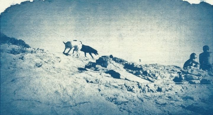 Les chiens des Rochers 2 - Photography,  3.9x6.9 in, ©2017 by Ariane Canta-Brejnik -                                                                                                                                                      cyanotype, procédé photographique ancien, Limited Edition