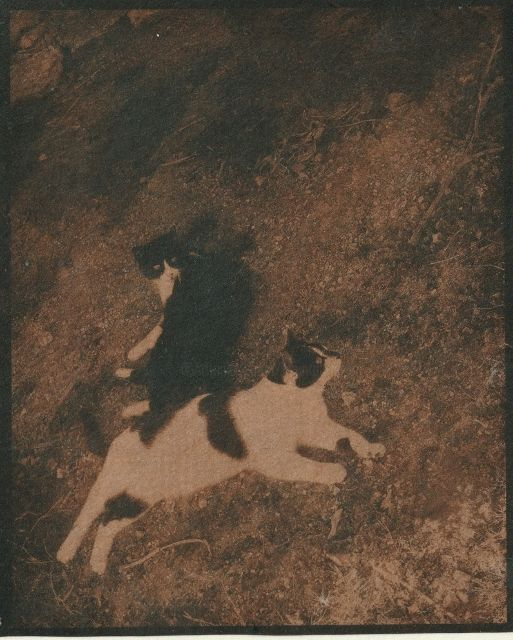 Les deux frères 2 - Photography ©2018 by Ariane Canta-Brejnik -                            Animals, cyanotype, cianotipia
