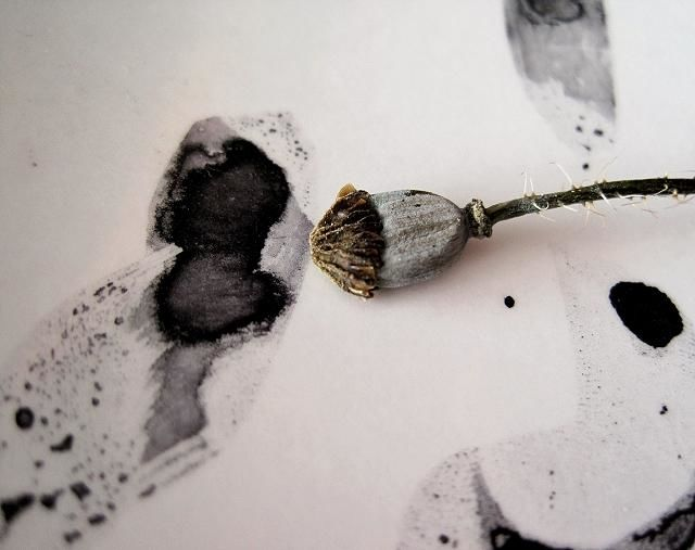 encre 2 - Photography ©2010 by Ariane Canta-Brejnik -            Variations sur coquelicots, Limited Edition