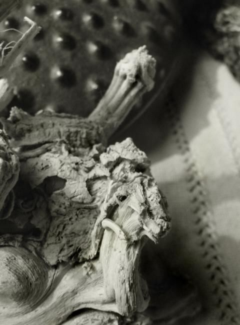 textures - Photography ©2010 by Ariane Canta-Brejnik -            Black and White