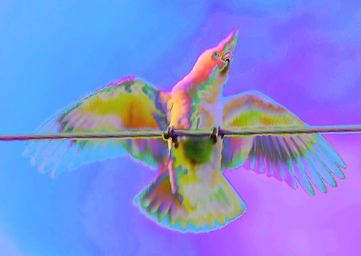 """Photography titled """"Cheeky Galah"""" by Acko68, Original Art, Manipulated Photography"""