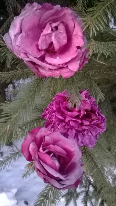 Roses and peony on winter fir - Photography ©2019 by Marina Alexandrova -                                            Photorealism, Flower, winter flowers