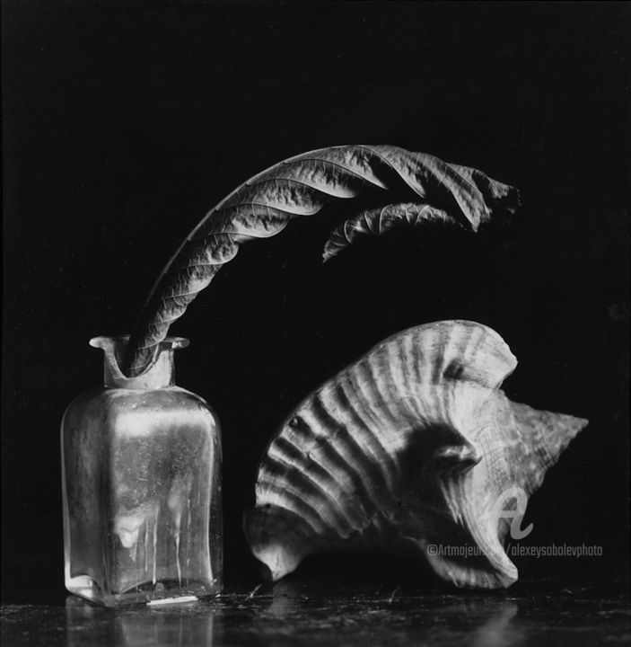 Still Life with a shell - Photography,  15.8x15.8 in, ©2010 by Alexey Sobolev -                                                                                                                                                                                                                                                                                                                                                                                                                                                      Figurative, figurative-594, Still life, stilllife, film, silvergelatin, handprint, shell, leaf