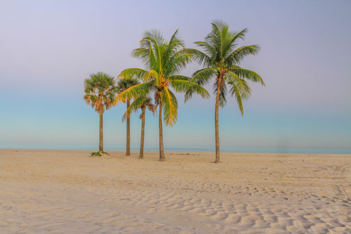 """Photography titled """"Palm tree"""" by Alexyp, Original Art,"""