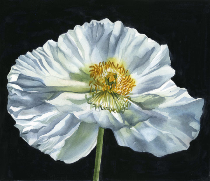 White poppy for peace alfred ng white poppy for peace painting 12x14x04 in 2018 by alfred ng mightylinksfo
