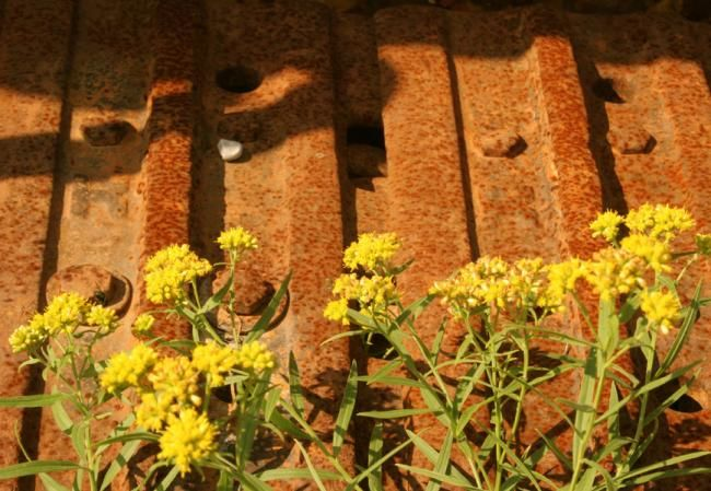 """Photography titled """"METAL GARDEN"""" by Anthony Amor, Original Art,"""