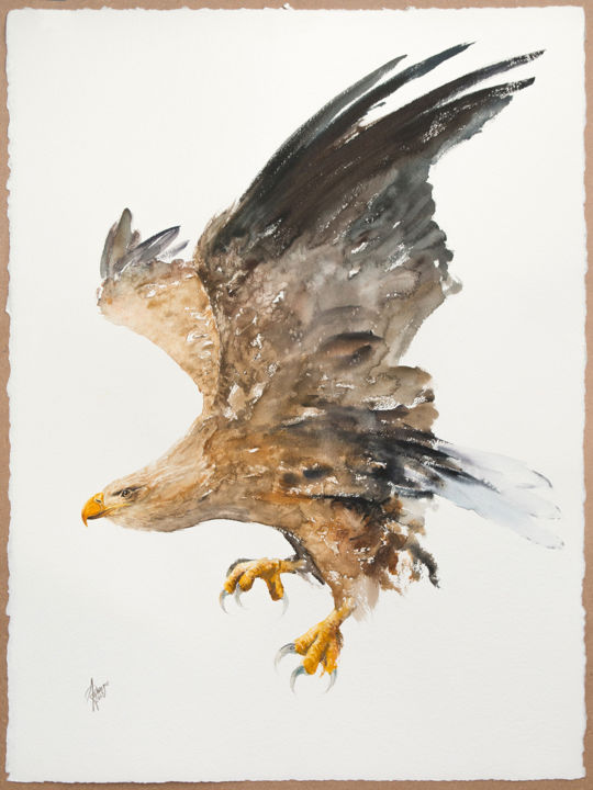 """Painting titled """"White-tailed Eagle…"""" by Andrzej Rabiega, Original Art, Watercolor"""