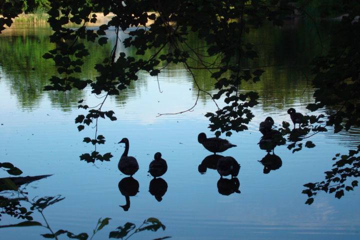 """Photography titled """"Ducky Tales"""" by Ak, Original Art, Digital Photography"""