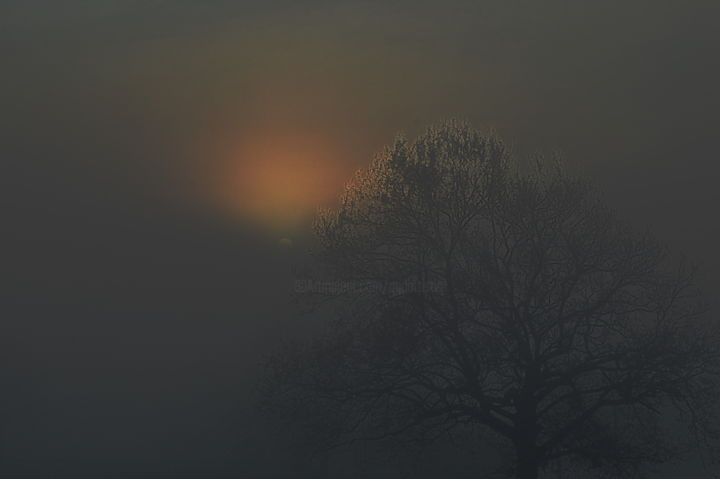 brouillard - Photography,  11.8x15.8 in, ©2019 by Aquartistiq -                                                                                                              Tree, arbre