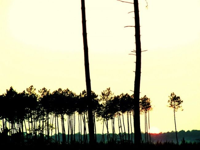 foret - Photography,  7.9x11.8 in, ©2009 by Aquartistiq -