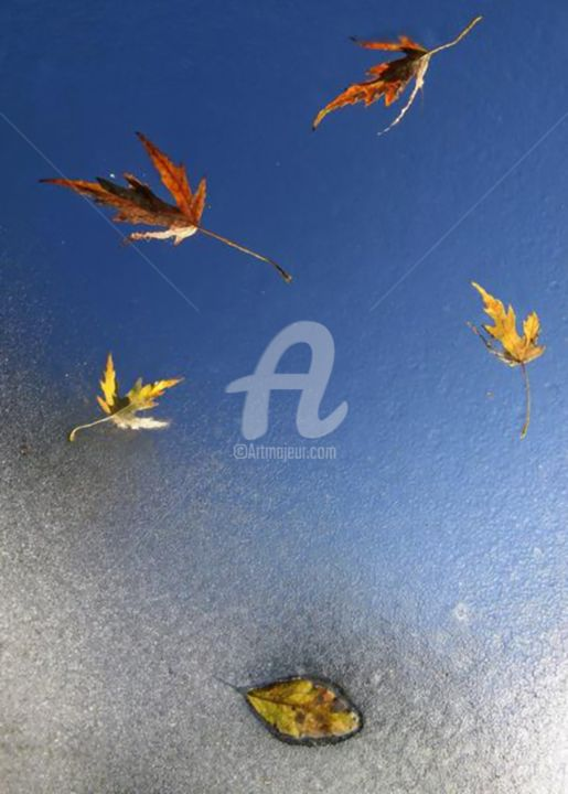 """Photography titled """"Leaves"""" by Archangelus, Original Art,"""