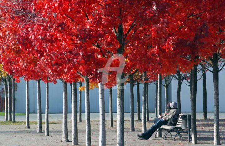 """Photography titled """"Red Trees"""" by Archangelus, Original Art,"""