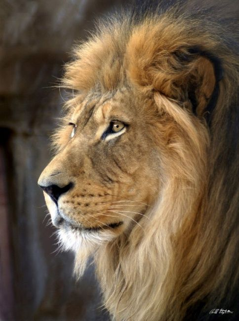 """Photography titled """"The King"""" by Bill Stephens, Original Art,"""