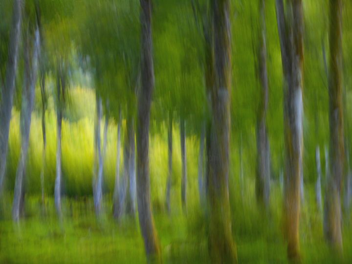 Là ou l'herbe pousse..... - Photography, ©2016 by Philippe Berthier -                                                                                                                                                                                                                                                                                                                                                                                                                                                          Impressionism, impressionism-603, Other, Tree, nature, couleur, paysage, bois, Limited Edition