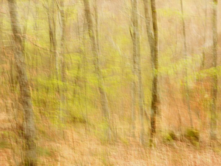 Promenade Matinale............ - Photography, ©2017 by Philippe Berthier -                                                                                                                                                                                                                                                                                                                                                                                                                                                                                                      Impressionism, impressionism-603, Other, Tree, Nature, Colors, mouvement, espace, bois, Limited Edition