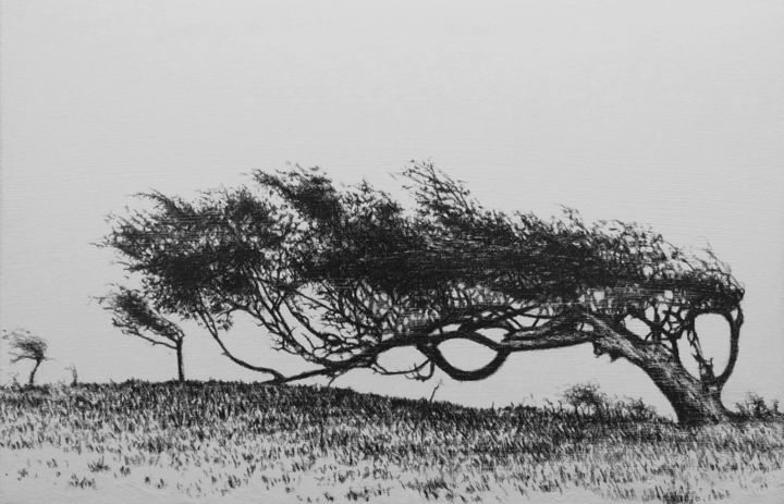 Anémomorphose - Drawing,  27x41 cm ©2017 by B-ALEXIS -                                                            Figurative Art, Canvas, Tree, Craie, dessin, noir, blanc