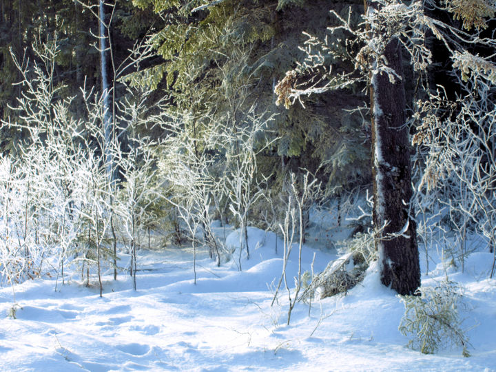 """Photography titled """"cold silence"""" by Barrywking, Original Art,"""
