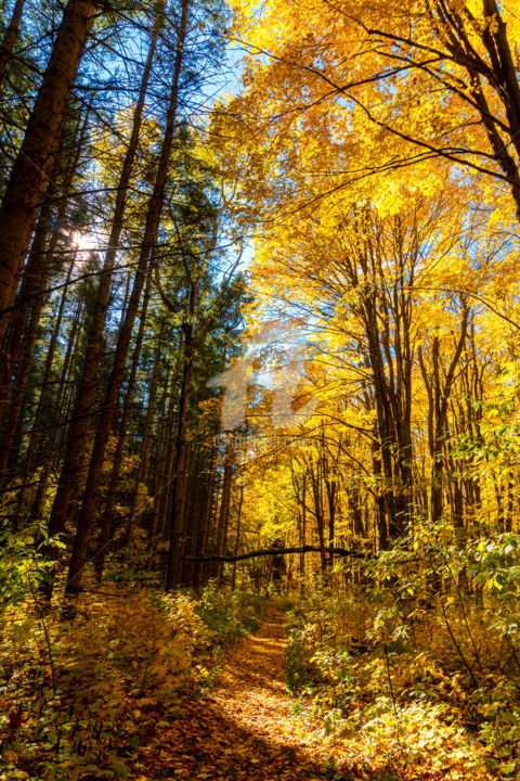 """Photography titled """"Forests put on a go…"""" by Benjamin, Original Art, Digital Photography"""