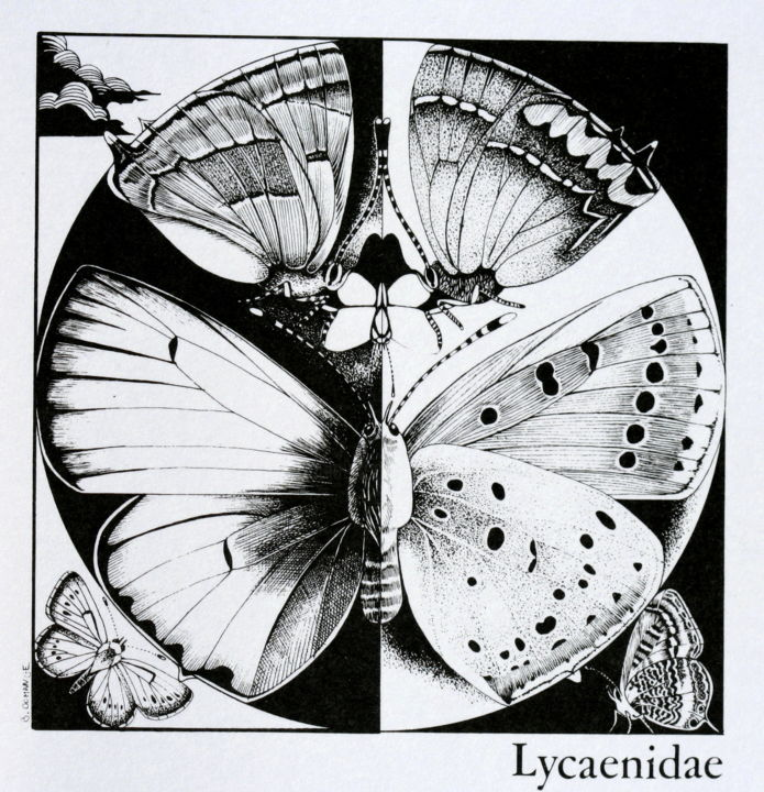 Didactique N/B Lyc. - Drawing,  3.9x3.9 in, ©1990 by BERNARD DOMANGE -                                                                                                                                                                                                                                                                                                                      Figurative, figurative-594, Other, Animals, papillons, entomologie