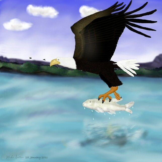 Nature's Dinner - Painting,  10x8 in ©2011 by Birdman -                            Realism, A beautiful bald eagle has just caught his dinner as their reflections are right at the water's surface & now he needs to eat it before the eagles in the distance come & steal it!