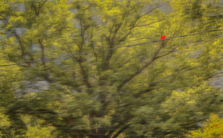 """Photography titled """"Red bird"""" by Blame Mr Ken, Original Art, Manipulated Photography"""