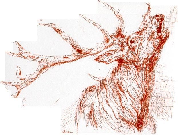 etude de cerf - Painting, ©2006 by Ster -
