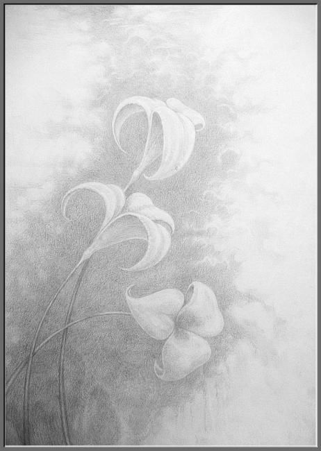 Flowers - Drawing,  40x30 cm ©2010 by Борис Тупейко -                        Black and White