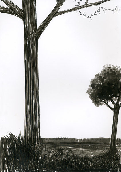 D4 - série des arbres - Drawing,  11.4x8.3 in, ©2007 by Richard Brachais -                                                              Black and White