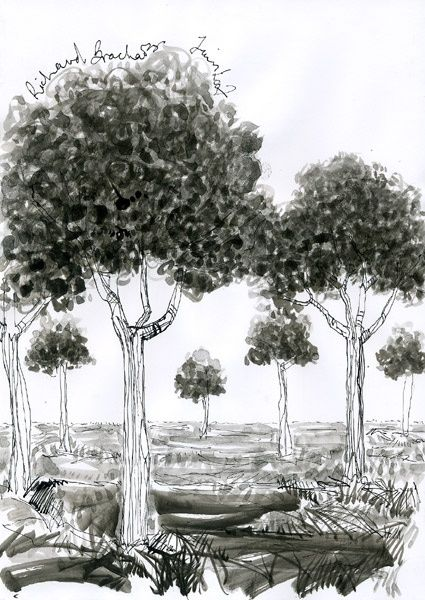 D15 - série des arbres - Drawing,  11.4x8.3 in, ©2007 by Richard Brachais -                                                              Black and White