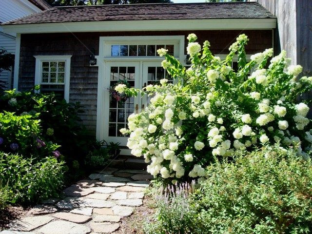 Hydrangeas By The Back Door Photography By Bssitto Artmajeur
