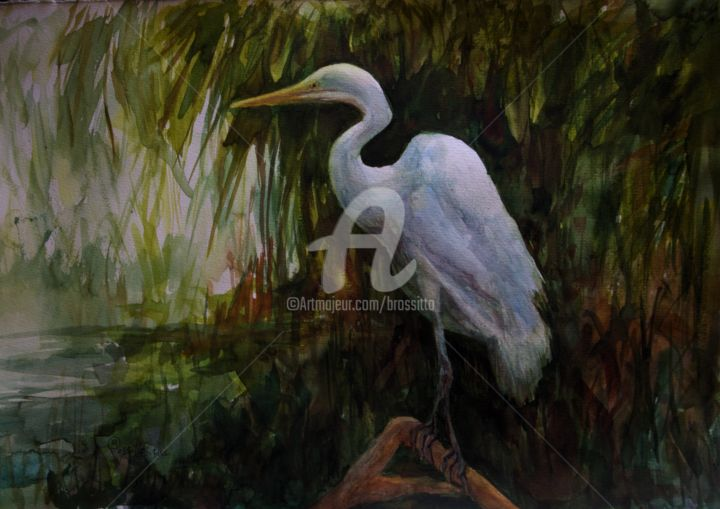 Watching and Waiting - ©  bird, nature, wading bird, egret, white bird, marsh, B.Rossitto Fine Art Online Artworks